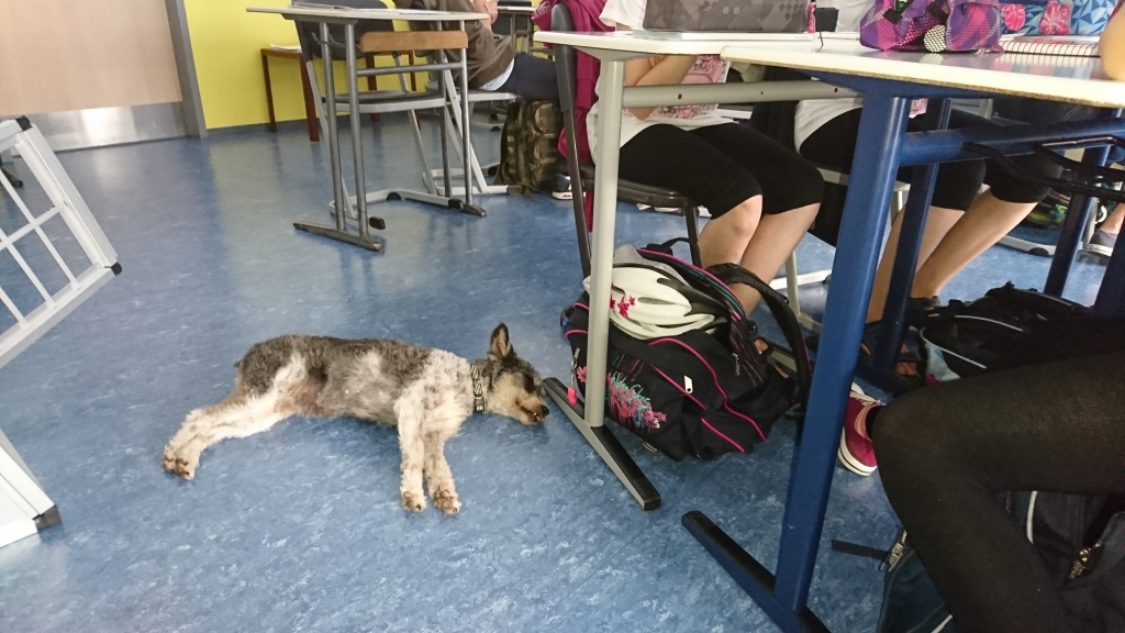 Wenn Kessie in der Klasse ist, wissen alle Kinder, wie sie sich verhalten müssen.