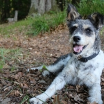 schulhund kessie e1540823217253