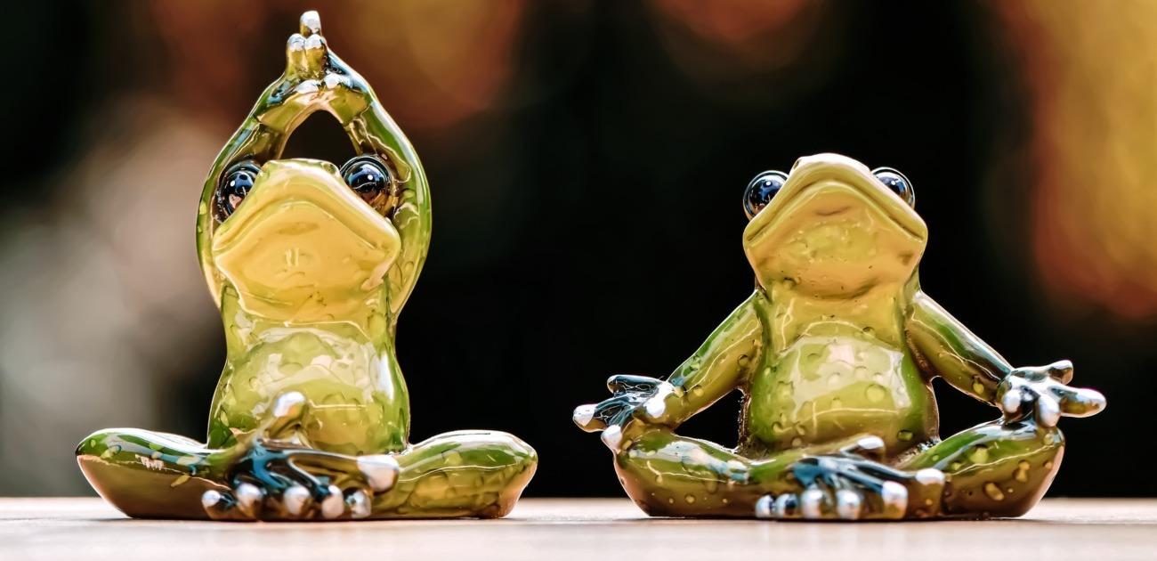 Frösche machen Yoga